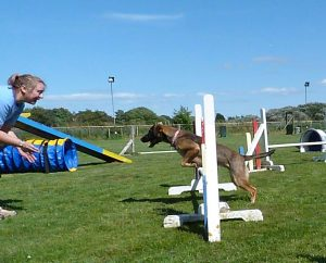 WLF Agility About Us